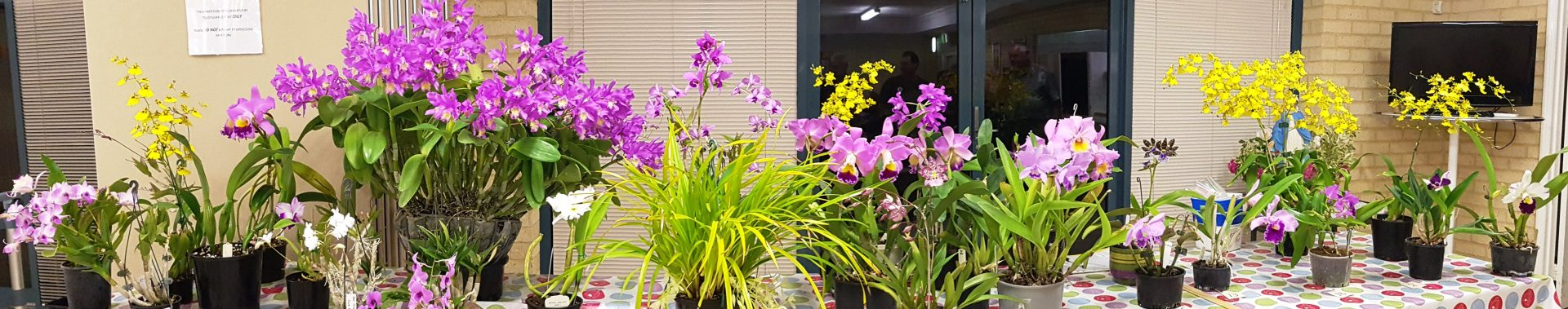 Peel Region Orchid Society